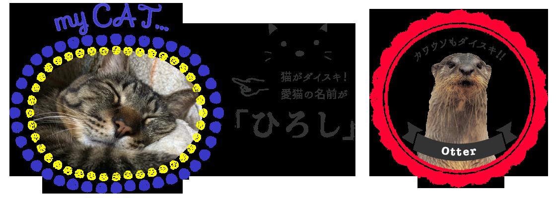 猫がダイスキ!愛猫の名前が「ひろし」カワウソもダイスキ!!